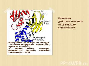 Дифтерийный токсин –простой. Обладает Рибозил-трансферазной активностью, перенос