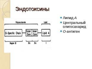 Липид А Липид А Центральный олигосахарид О-антиген
