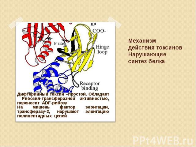 Дифтерийный токсин –простой. Обладает Рибозил-трансферазной активностью, переносит ADF-рибозу Дифтерийный токсин –простой. Обладает Рибозил-трансферазной активностью, переносит ADF-рибозу На мишень фактор элонгации, трансферазу-2, нарушают элонгацию…