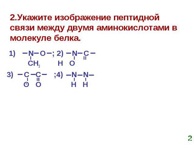 2.Укажите изображение пептидной связи между двумя аминокислотами в молекуле белка. 1) N O ; 2) N C CH3 H O 3) C C ;4) N N O O H H