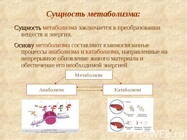 Сущность метаболизма заключается в преобразовании веществ и энергии. Сущность метаболизма заключается в преобразовании веществ и энергии. Основу метаболизма составляют взаимосвязанные процессы анаболизма и катаболизма, направленные на непрерывное об…