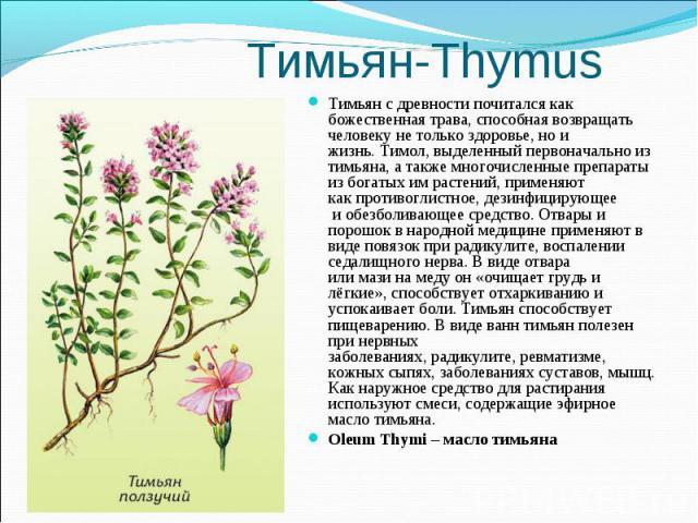 Тимьян с древности почитался как божественная трава, способная возвращать человеку не только здоровье, но и жизнь.Тимол, выделенный первоначально из тимьяна, а также многочисленные препараты из богатых им растений, применяют какпротивогл…