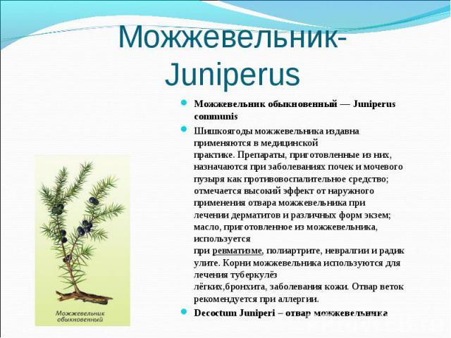 Можжевельник обыкновенный — Juniperus communis Можжевельник обыкновенный — Juniperus communis Шишкоягоды можжевельника издавна применяются в медицинской практике.Препараты, приготовленные из них, назначаются призаболеваниях почеки&…