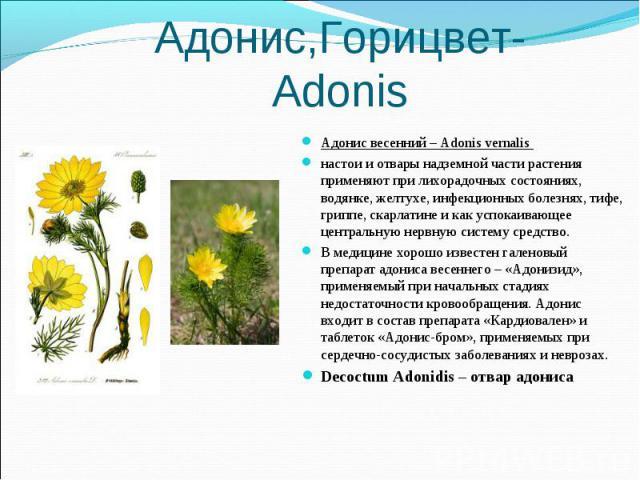 Адонис весенний – Adonis vernalis Адонис весенний – Adonis vernalis настои и отвары надземной части растения применяют при лихорадочных состояниях, водянке, желтухе, инфекционных болезнях, тифе, гриппе, скарлатине и как успокаивающее центральную нер…