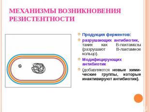 Продукция ферментов: разрушающих антибиотик, таких как B-лактамазы (разрушают В-