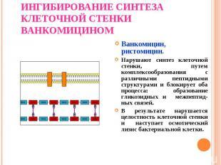 Ванкомицин, ристомицин. Ванкомицин, ристомицин. Нарушают синтез клеточной стенки
