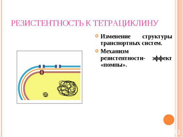 Изменение структуры транспортных систем. Изменение структуры транспортных систем. Механизм резистентности- эффект «помпы».