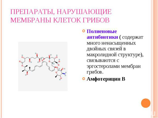 Полиеновые антибиотики ( содержат много ненасыщенных двойных связей в макролидной структуре), связываются с эргостеролами мембран грибов. Полиеновые антибиотики ( содержат много ненасыщенных двойных связей в макролидной структуре), связываются с эрг…