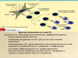 Действие онковакцины на основе DC Действие онковакцины на основе DC заключается