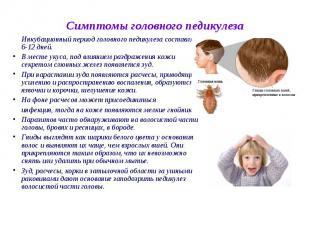 Инкубационный период головного педикулеза составляет 6-12 дней. Инкубационный пе