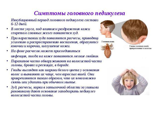 Инкубационный период головного педикулеза составляет 6-12 дней. Инкубационный период головного педикулеза составляет 6-12 дней. В месте укуса, под влиянием раздражения кожи секретом слюнных желез появляется зуд. При нарастании зуда появляются расчес…