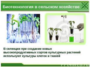 Биотехнология в сельском хозяйстве В селекции при создании новых высокопродуктив