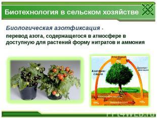 Биотехнология в сельском хозяйстве Биологическая азотфиксация - перевод азота, с