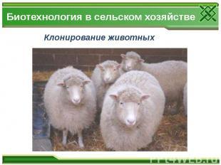 Биотехнология в сельском хозяйстве Клонирование животных