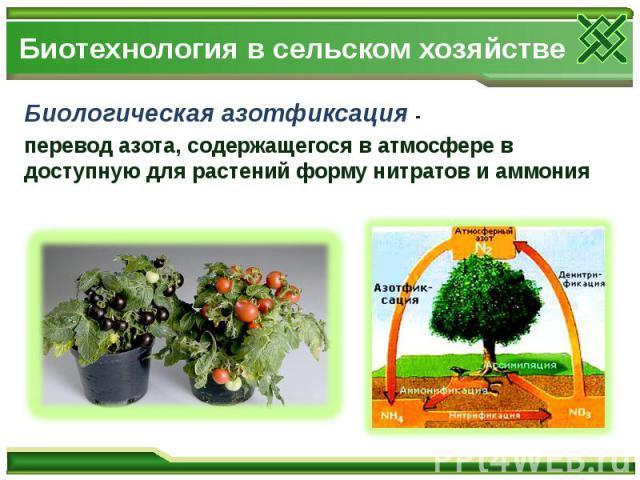 Биотехнология в сельском хозяйстве Биологическая азотфиксация - перевод азота, содержащегося в атмосфере в доступную для растений форму нитратов и аммония