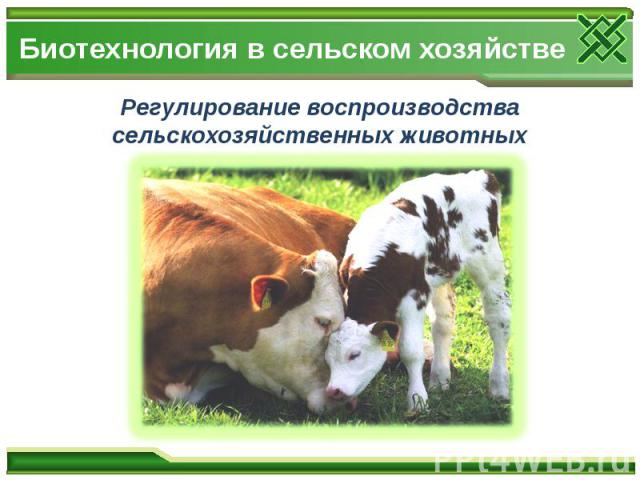 Биотехнология в сельском хозяйстве Регулирование воспроизводства сельскохозяйственных животных