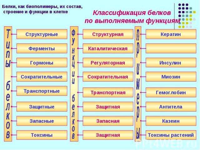 Классификация белков Классификация белков по выполняемым функциям