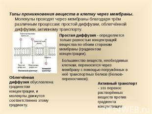 Типы проникновения веществ в клетку через мембраны. Молекулы проходят через мемб