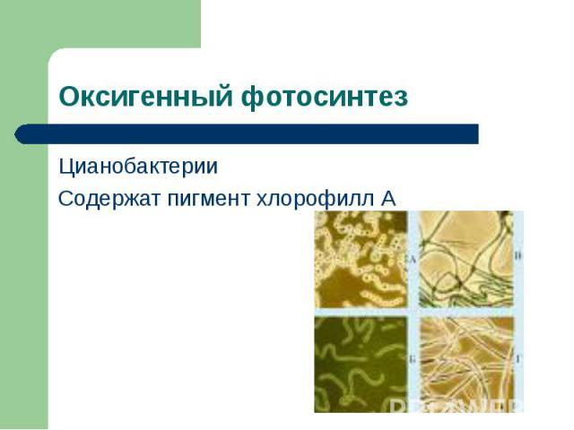 Цианобактерии Цианобактерии Содержат пигмент хлорофилл А