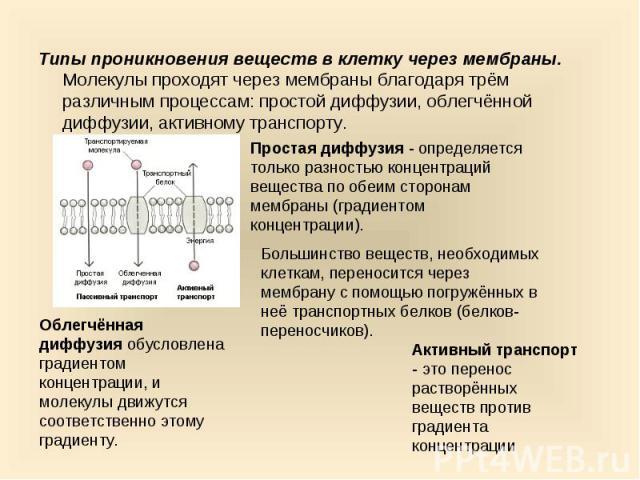 Типы проникновения веществ в клетку через мембраны. Молекулы проходят через мембраны благодаря трём различным процессам: простой диффузии, облегчённой диффузии, активному транспорту. Типы проникновения веществ в клетку через мембраны. Молекулы прохо…