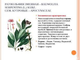 Ботаническая характеристика Ботаническая характеристика Многолетний вечнозеленый
