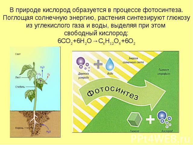 В природе кислород образуется в процессе фотосинтеза. Поглощая солнечную энергию, растения синтезируют глюкозу из углекислого газа и воды, выделяя при этом свободный кислород: 6CO2+6H2O→C6H12O6+6O2