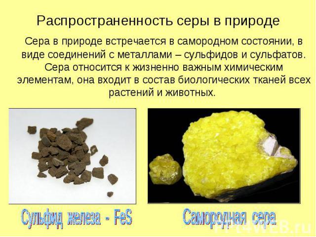 Распространенность серы в природе Сера в природе встречается в самородном состоянии, в виде соединений с металлами – сульфидов и сульфатов. Сера относится к жизненно важным химическим элементам, она входит в состав биологических тканей всех растений…