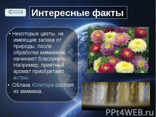 • Некоторые цветы, не имеющие запаха от природы, после обработки аммиаком начина