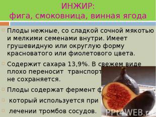 ИНЖИР: фига, смоковница, винная ягода Плоды нежные, со сладкой сочной мякотью и