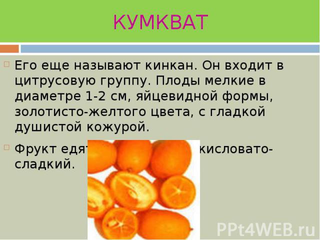 КУМКВАТ Его еще называют кинкан. Он входит в цитрусовую группу. Плоды мелкие в диаметре 1-2 см, яйцевидной формы, золотисто-желтого цвета, с гладкой душистой кожурой. Фрукт едят целиком, вкус кисловато-сладкий.
