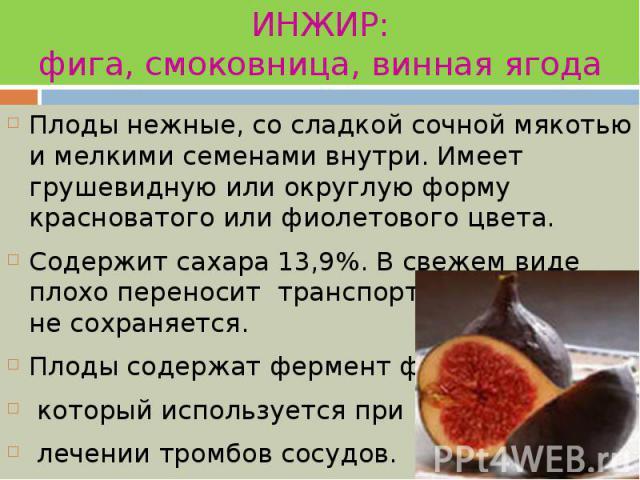 ИНЖИР: фига, смоковница, винная ягода Плоды нежные, со сладкой сочной мякотью и мелкими семенами внутри. Имеет грушевидную или округлую форму красноватого или фиолетового цвета. Содержит сахара 13,9%. В свежем виде плохо переносит транспортировку и …