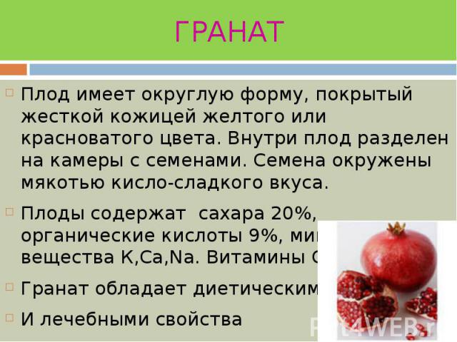 ГРАНАТ Плод имеет округлую форму, покрытый жесткой кожицей желтого или красноватого цвета. Внутри плод разделен на камеры с семенами. Семена окружены мякотью кисло-сладкого вкуса. Плоды содержат сахара 20%, органические кислоты 9%, минеральные вещес…
