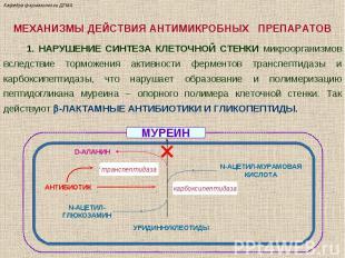 МЕХАНИЗМЫ ДЕЙСТВИЯ АНТИМИКРОБНЫХ ПРЕПАРАТОВ 1. НАРУШЕНИЕ СИНТЕЗА КЛЕТОЧНОЙ СТЕНК