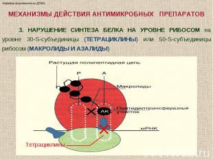 МЕХАНИЗМЫ ДЕЙСТВИЯ АНТИМИКРОБНЫХ ПРЕПАРАТОВ 3. НАРУШЕНИЕ СИНТЕЗА БЕЛКА НА УРОВНЕ