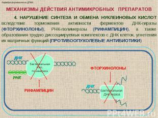 МЕХАНИЗМЫ ДЕЙСТВИЯ АНТИМИКРОБНЫХ ПРЕПАРАТОВ 4. НАРУШЕНИЕ СИНТЕЗА И ОБМЕНА НУКЛЕИ