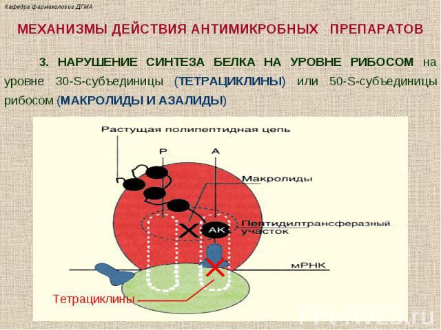 МЕХАНИЗМЫ ДЕЙСТВИЯ АНТИМИКРОБНЫХ ПРЕПАРАТОВ 3. НАРУШЕНИЕ СИНТЕЗА БЕЛКА НА УРОВНЕ РИБОСОМ на уровне 30-S-субъединицы (ТЕТРАЦИКЛИНЫ) или 50-S-субъединицы рибосом (МАКРОЛИДЫ И АЗАЛИДЫ) Тетрациклины