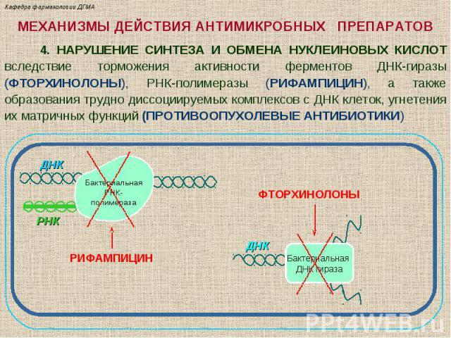 МЕХАНИЗМЫ ДЕЙСТВИЯ АНТИМИКРОБНЫХ ПРЕПАРАТОВ 4. НАРУШЕНИЕ СИНТЕЗА И ОБМЕНА НУКЛЕИНОВЫХ КИСЛОТ вследствие торможения активности ферментов ДНК-гиразы (ФТОРХИНОЛОНЫ), РНК-полимеразы (РИФАМПИЦИН), а также образования трудно диссоциируемых комплексов с ДН…