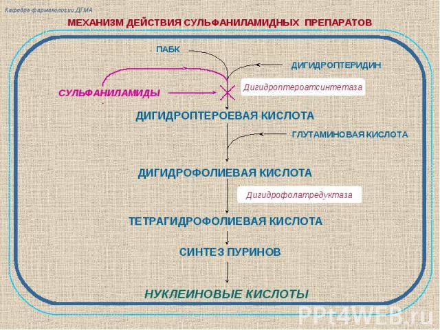Кафедра фармакологии ДГМА