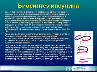 Биосинтез инсулина Биосинтез инсулина включает образование двух неактивных предш