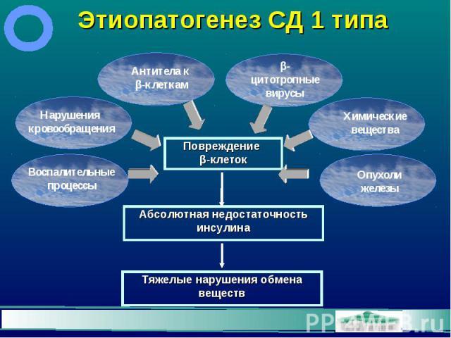Этиопатогенез СД 1 типа