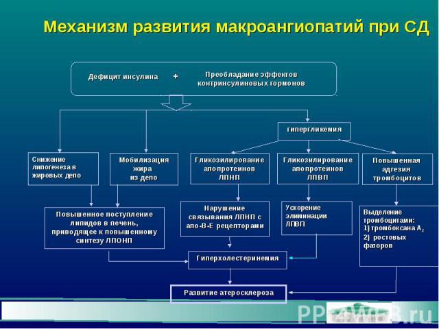 Механизм развития макроангиопатий при СД