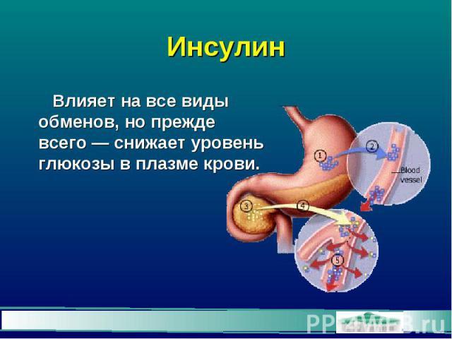 Инсулин Влияет на все виды обменов, но прежде всего — снижает уровень глюкозы в плазме крови.