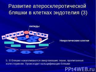 Развитие атеросклеротической бляшки в клетках эндотелия (3)