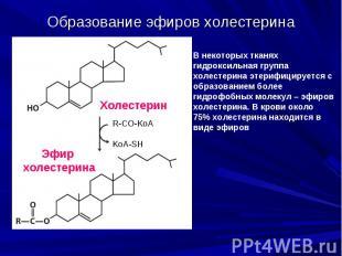 Образование эфиров холестерина