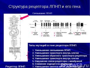 Структура рецептора ЛПНП и его гена