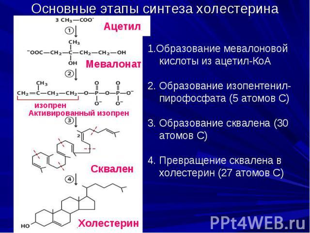 Основные этапы синтеза холестерина