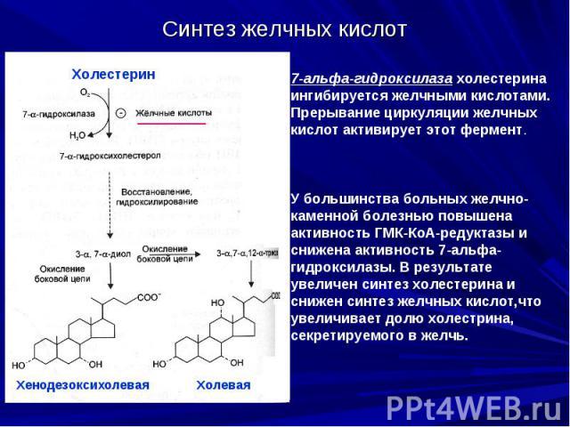 Синтез желчных кислот