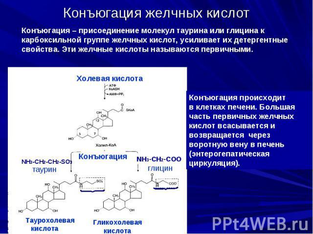 Конъюгация желчных кислот