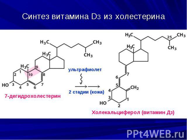 Синтез витамина D3 из холестерина