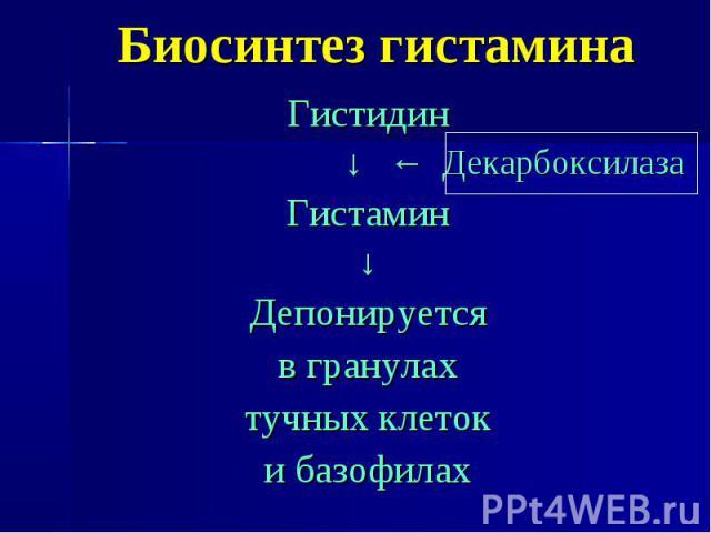 Биосинтез гистамина Гистидин ↓ ← Декарбоксилаза Гистамин ↓ Депонируется в гранулах тучных клеток и базофилах